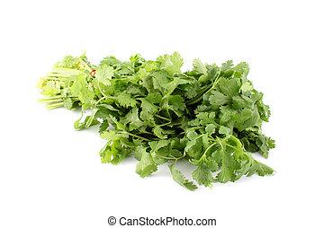 Cilantro or coriander - Leafy green and flavorful coriander...
