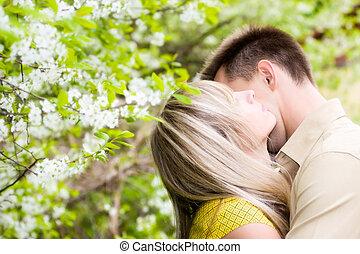 ciliegia, coppia, fiori, albero