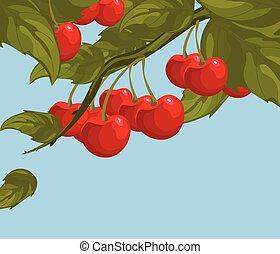 ciliegia, delizioso, ramo