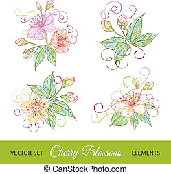 ciliegia, fiori, set