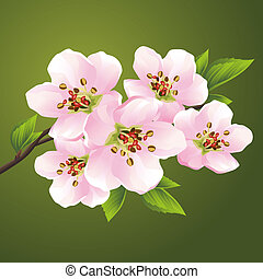 ciliegia, fioritura, -, giapponese, albero, sakura