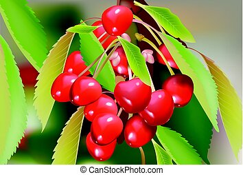 ciliegia, leaves., illustrazione, vettore, ramo, rosso