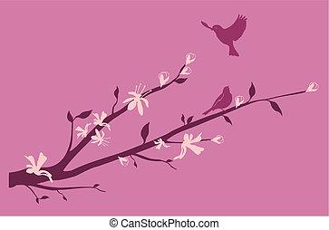 ciliegia, orientale, uccelli, ramo