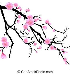 ciliegia, ramo, fiori