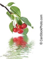 ciliegia rossa, con, foglie, e, gocce acqua, isolato, bianco