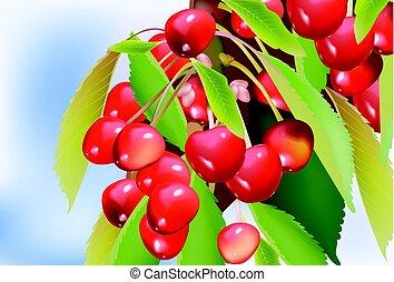 ciliegia, vettore, leaves., illustrazione, ramo