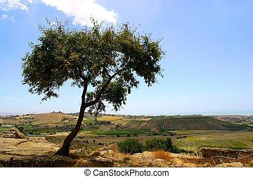 cima, árbol, colina