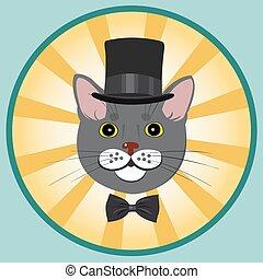 cima, arco, elegante, cravatta, gatto, cappello