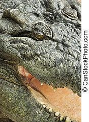 cima., crocodilo, fim