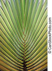 cima, de, grande, árvore palma, folha