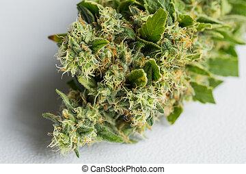 cima fim, marijuana, médico, planta maconha, foco, resinous, macro, flor