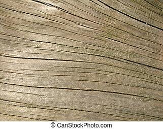 cima., fim, tronco, árvore, driftwood