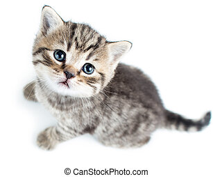 cima, gatto, fondo, gattino, bambino, bianco, vista