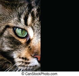 cima, metade, fim, cat., rosto, vetorial, maine, coon