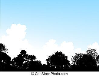 cime albero, terreno boscoso
