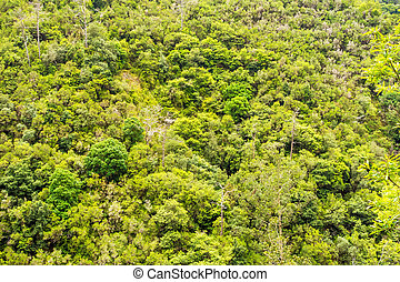 cimes arbre, exotique, jungle, /, forêt