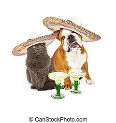 Cute grey cat and bulldog sitting together celebrating Conco De Mayo wearing mexican sombreros with margarita cocktails