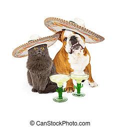 Cinco De Mayo Cat and Dog - Cute grey cat and bulldog...
