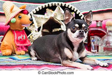 Mexican chihuahua celebrating Cinco de Mayo