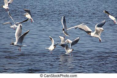 cinco, gaivotas mar