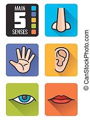 cinco sentidos, nariz, mão, boca, olho, orelha, vetorial, ícones, jogo