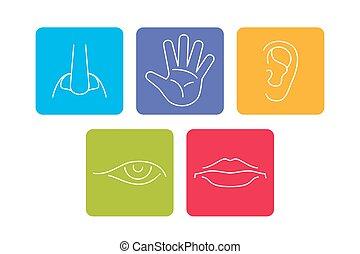 cinco sentidos, vetorial, ícones, jogo, isolado, branca