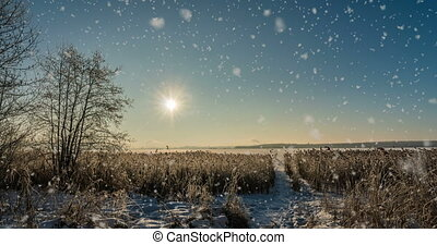 cinemagraf, snow falls on hoarfrost pine branches, winter...