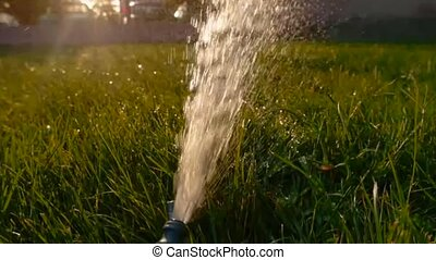 Cinemagraph Flow of water spill out to  the grass macro clip footage