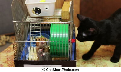Cinemagraph - Hamster in a Cage and Black Cat. Home fat...