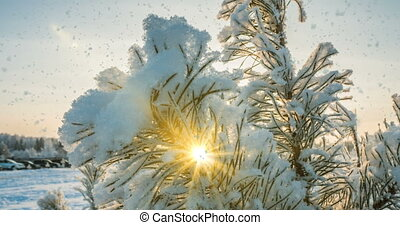 cinemagraph, loop., neige, forêt, tomber, hiver
