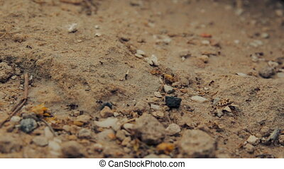 Cinemagraph of closeup shot of a group of black ants walking on dirt
