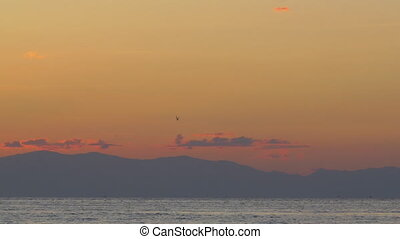 Cinemagraph - sea gull is flying over the sea in twilight