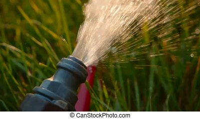Cinemagraph. Watering pipe. Flow of water spill out to  the grass macro clip footage