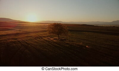 Cinematic Aerial shot orbiting a lone tree at sunset .