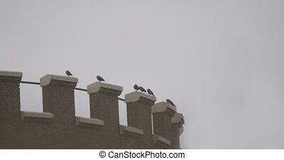 Cinematic shot of crows on a water tower.
