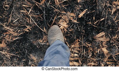 Cinematic survey from above of walking male feet in galoshes along the ashes of scorched earth in a deserted field during the day. Man walks through the burnt ash black grass and takes off his legs.