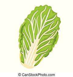 cinese, cabbage., isolato, fondo., cavolo, bianco