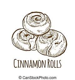 Cinnamon Rolls, hand drawn vector