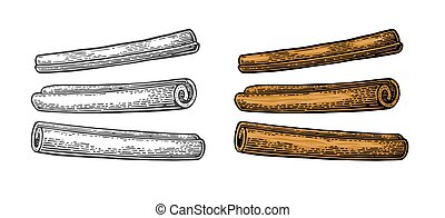 Cinnamon stick set. Vector black vintage engraving