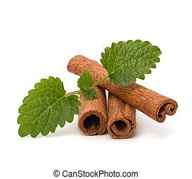 Cinnamon sticks and fresh bergamot mint leaf isolated on ...