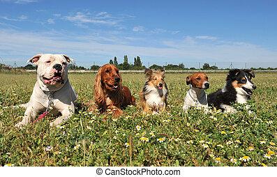 cinq, chiens