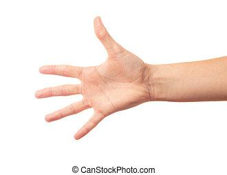 cinq, doigts, main humaine