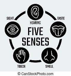 cinque sensi, vettore, set, icone