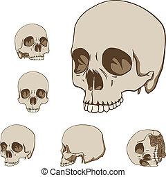cinque, set, crani