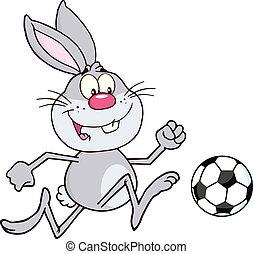 cinzento, bola futebol, coelho