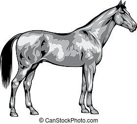 cinzento, cavalo