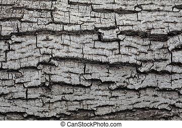 cinzento, madeira, antigas