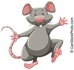 cinzento, rato