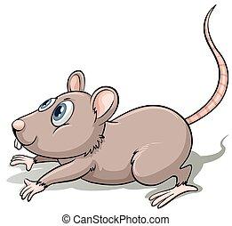 cinzento, rato, um