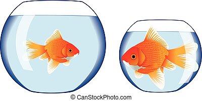 ciotola goldfish